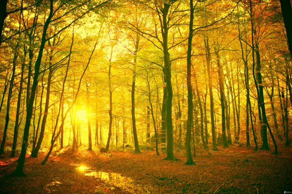 jaunes-foret-dautomne-couchage-de-soleil-dans-la-foret-feuilles-149066