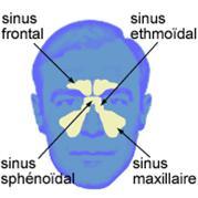 sinus av légende