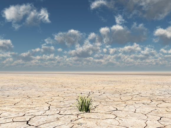 Plants grow up from dried desert mud