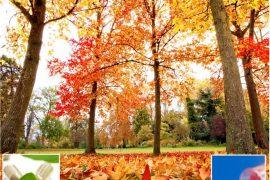 Guide pratique automne couv